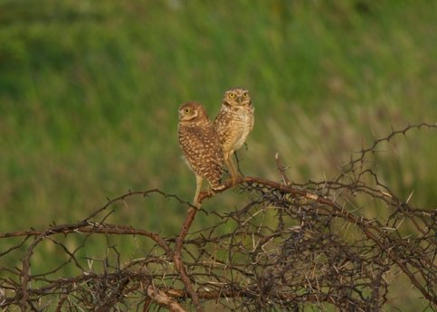 De mooiste vogels van Aruba